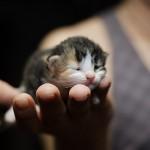 Милосердие к животным