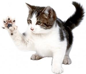 стричь когти кошке