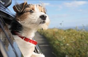 обучение собаки любовью
