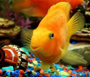 Болезни рыбок