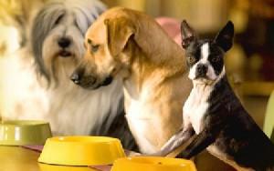 как правильно кормит собаку