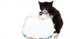 кот на рыбалке