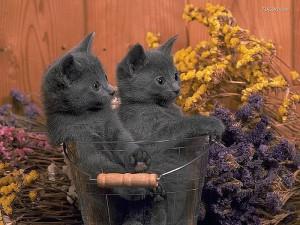 Кошки – лучшее лекарство