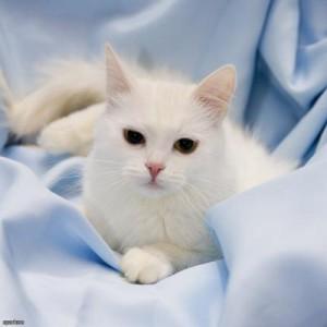 Кошки манипулируют хозяевами