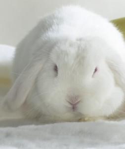 выбор кролика