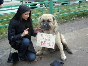 Гуманное отношение к животным