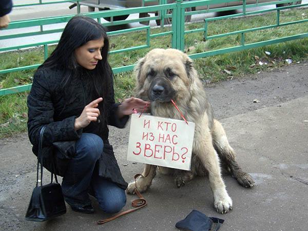 Собаки, сергей архипов, администрация екатеринбурга, анна вайман, зоозащита, олег ваничкин, кинологическая служба