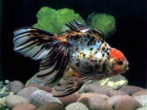 Как правильно выбрать рыб для аквариума