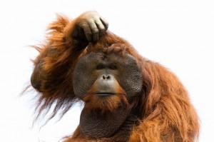 обезьяна подрожает
