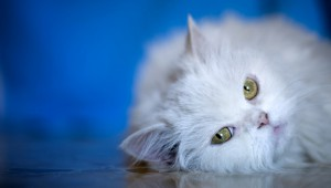 салон для кошек
