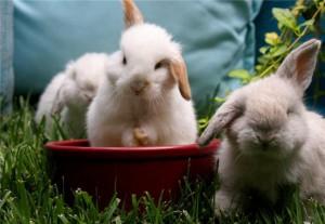 Что видят кролики?