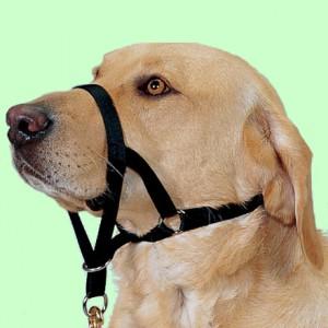 Защитим собаку от жестокости
