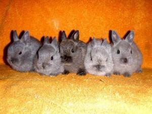 Различия между кроликом и зайцем