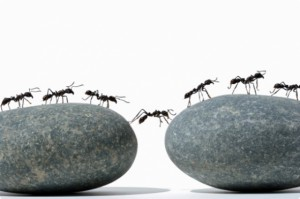 Жизнь и судьба муравейника