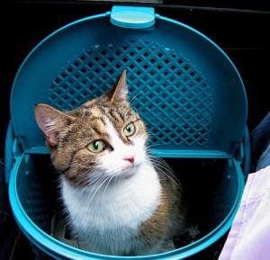 Перевозка кошки