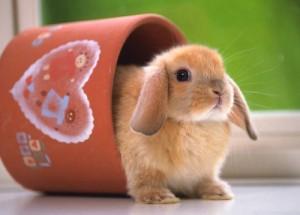 Кролик в доме