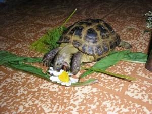 содержание черепахи в доме