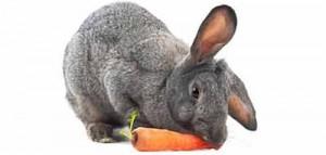 зрение кроликов