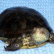 Правильный уход за черепахами