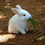 правила ухода за кроликами