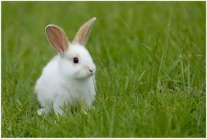 Создаем игровую площадку для домашнего кролика