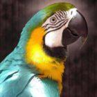 Попугай в доме