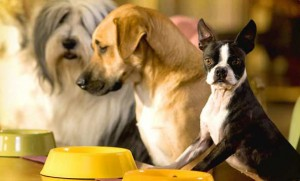 Капли от блох для собак
