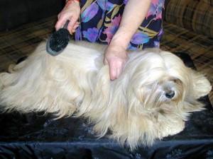 Уход за шерстью собак в домашних условиях