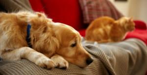 Диабет у собаки