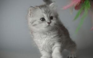 Как снова приручить кошку к лотку