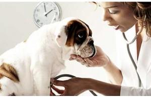 Болезни сердца собаки