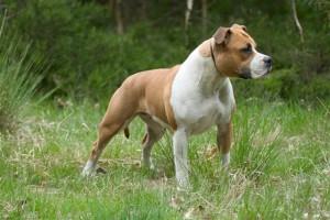 Мифы о собаках