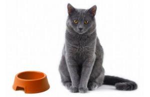 Правильное питание кошек и собак