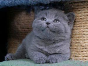 Кошки переносят легко жару