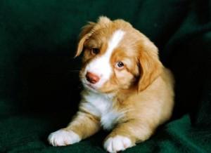 Как почистить у собаки параанальные железы