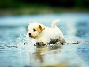 Как вылечить запор у собаки