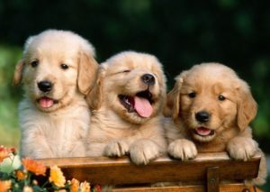 Собаки в ожидании жаркого лета