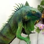 Приобретение экзотического животного