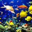 уход за рыбками