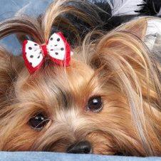 Стрижка для собак