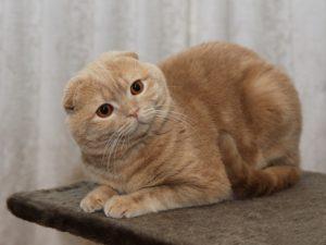 Прививки для домашней кошки