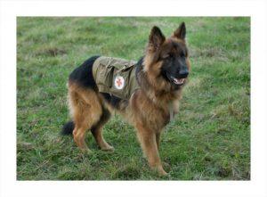 Собаки во время войны