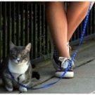 Характер по животному