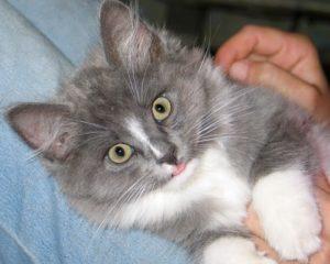 Консервы или сушка для кота
