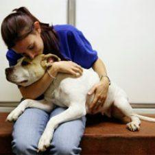 Можно ли усыпить собаку в домашних условиях