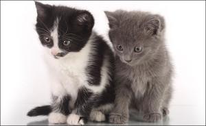 3 мифа о кормлении кота