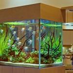 Как ухаживать за аквариумом