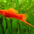 рацион аквариумных рыбок