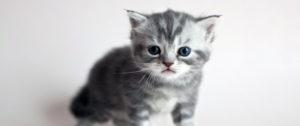 глистогонить котят