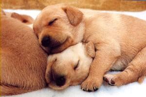 Искусственные щенки